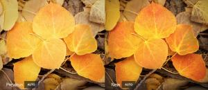 """تحديث تطبيق """"لايت روم"""" Lightroom من أدوبي يُضيف أداة ذكية لتعديل ألوان الصور"""